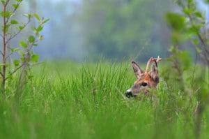 deer hunging 2